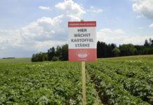 Auch der Neueinstieg in den Anbau von Stärkeindustriekartoffeln (Stik) ist möglich.