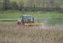 Mittels Mulch- und Direktsaat von Mais (im Bild) oder von Zückerrüben lässt sich Bodenerosion durch Abschwemmung wirkungsvoll verhindern. Allerdings ist bei diesen Verfahren kurz vor oder nach der Aussaat eine Glyphosatanwendung unverzichtbar.