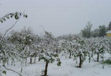Nach der Frost- und Schneekatastrophe Ende April wäre rasche Hilfe notwendig.