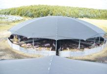 Roundhouse-Stall für Wartesauen aus der Vogelperspektive.