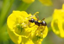 Im Sommer haben Ameisen Hochsaison. Sie säubern unsere Parks und Gärten