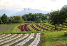 Die Salatfelder befinden sich gleich unterhalb des Hofes.