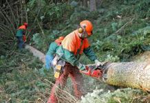 Die Aufarbeitung von Schadholz ist von größter Bedeutung.