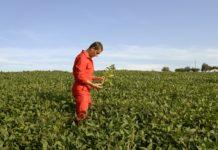 Durch Innovationen in der Pflanzenzucht können die knappen Bodenressourcen weltweit erhalten und größere Erträge pro Flächeneinheit erzielt werden.