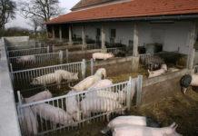 Der Auslauf für Tiere aller Altersstufen ist in der Biohaltung verpflichtend vorzusehen.