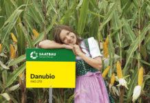 Danubio erzielt höchste Grün- und Trockenmasseerträge.