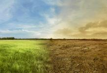 Saftig grüne und verdorrte Ackerflächen