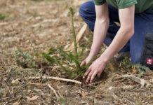 Derzeit beschäftigen die Waldbesitzer die Aufräumarbeiten beim Schadholz sowie die Aufforstung des Waldes.