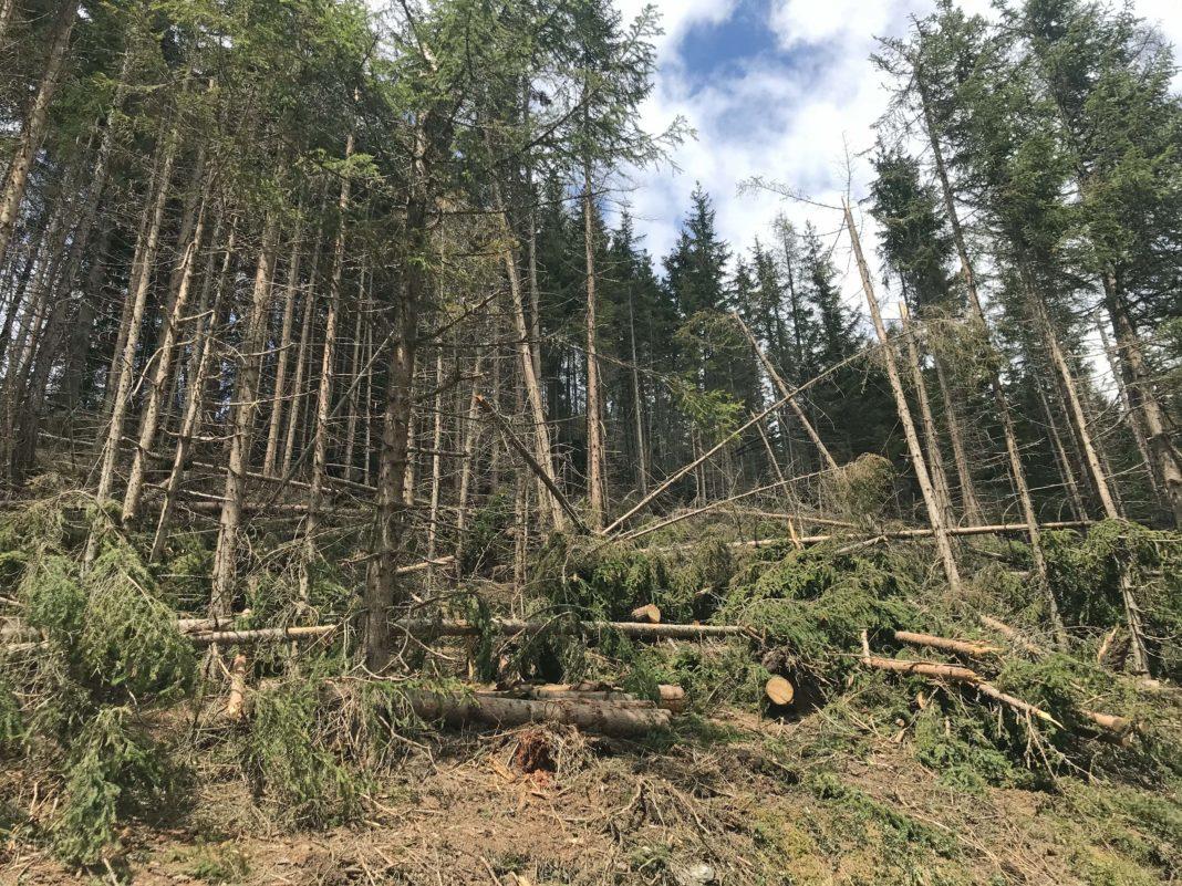 Vor allem in Osttirol gibt es noch große Mengen an Schadholz, das dringend aufgearbeitet werden muss.