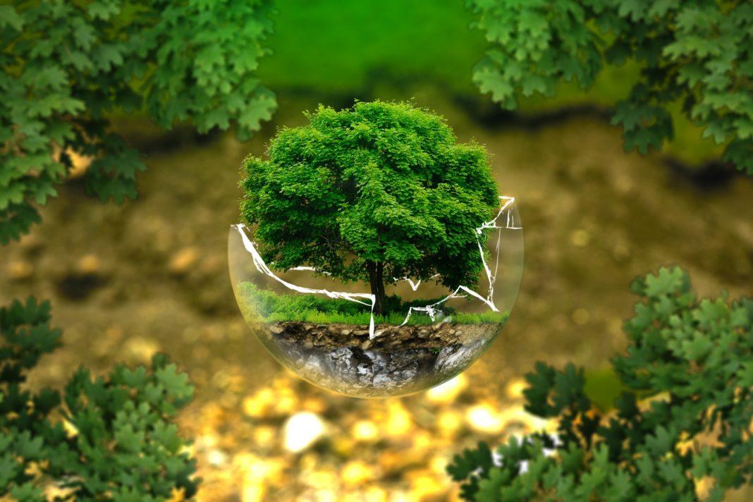 Die Klimaveränderung bringt Schwierigkeiten mit sich, besonders betroffen sind die Wälder.
